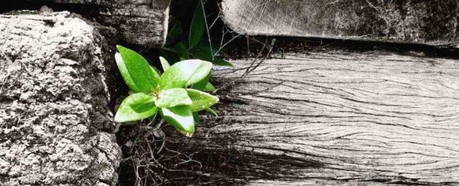 Sue-kohn-taylor-resilience