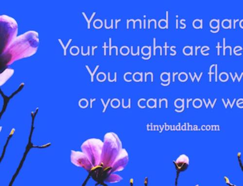 Your mind is a garden – you can grow flowers or you can grow weeds!